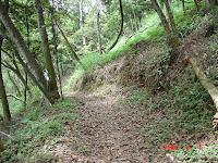 落葉鋪成的步道
