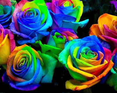 2580476438 a61c4c38ac - rainbow roses