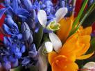 avatare flori primavara colorate