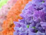 poze 8 martie flori