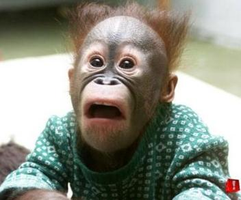 http://1.bp.blogspot.com/_Ql2X4-lHdlI/S8ZtXYij6gI/AAAAAAAAAwY/RRdtCixtMYk/s1600/shocked-look-on-a-monkeys-face.jpg