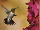 Los Vuelos del colibri