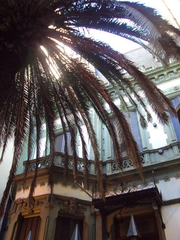 Casa con palmeras en buenos aires teresa santostefano - La casa de las palmeras ...