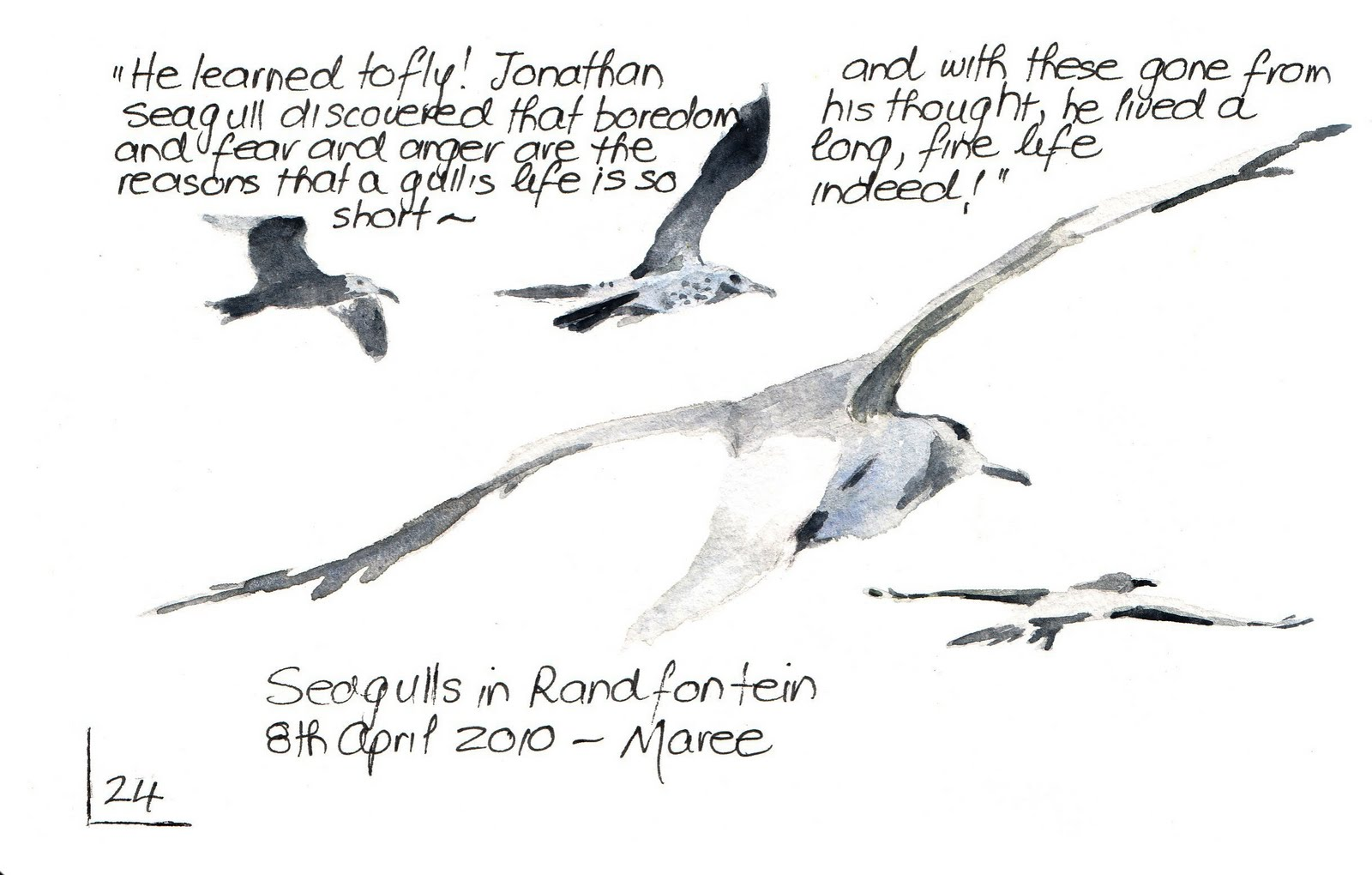 sketching in nature seagulls in randfontein maree
