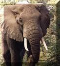 ¿ Qué hora es cuando un elefante pisa tu reloj?
