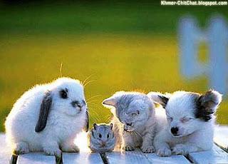 cute animal