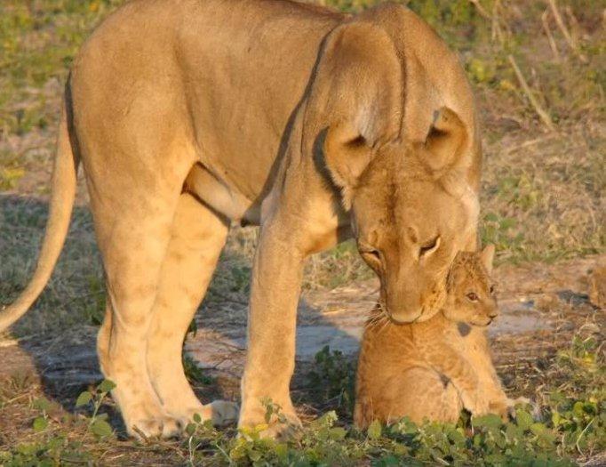 http://1.bp.blogspot.com/_QtH2zTVl70M/THOeIZZugmI/AAAAAAAAIvs/eAVxeaHbcd8/s1600/animal-safari00.jpg
