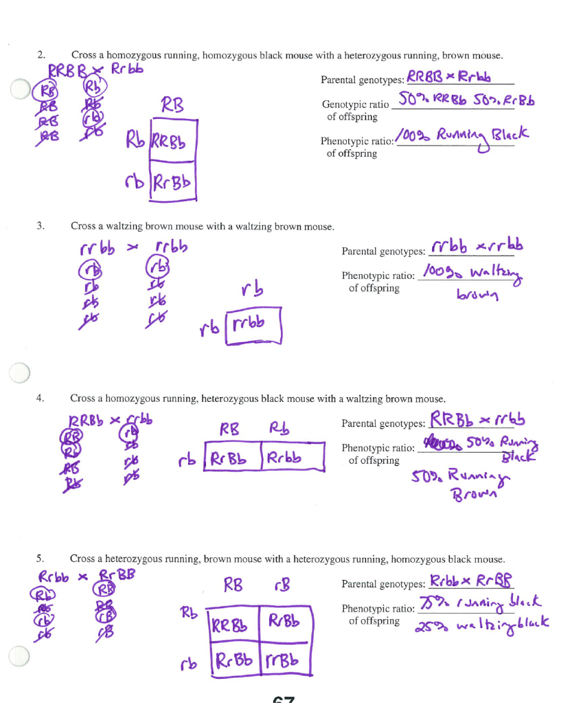 Blood Type Worksheet And Answer Key Also Blue Eye Color Pun T Square ...