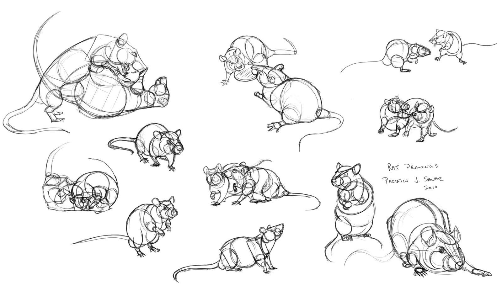 Uncategorized How To Draw Rats rats drawing photo28
