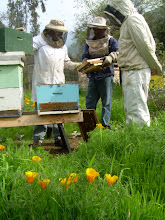 Amarillo y verde con apicultores.