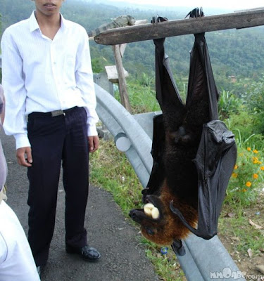 Amazing Big bat