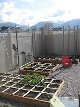 Pics of my garden before everything starts growing beautiful