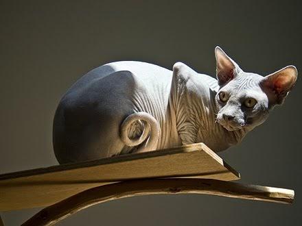 gato Arquivos - Universo de Gatos Blog