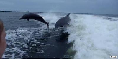 海豚對撞 - 海豚對撞影片 Dolphin Collision