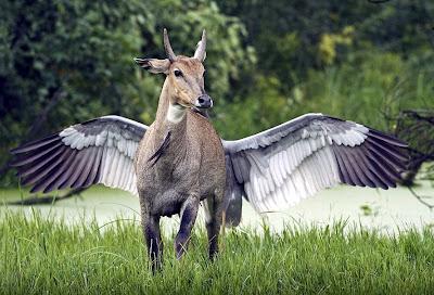 神獸 飛馬 - 神獸 飛馬降落凡間