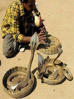 蛇人部落 - 巴基斯坦蛇人部落