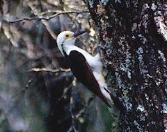 9 de Mayo - Día de las aves - AICAs