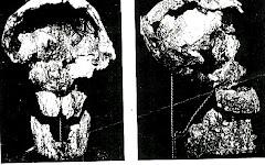 Hombre fosil de Baradero