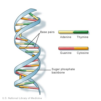 The dna salient features ccuart Images