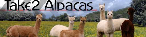 Take2 Alpacas