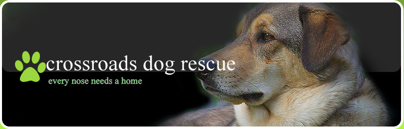 crossroads dog rescue