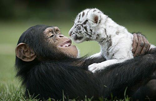 monkey_hugging_tiger.jpg