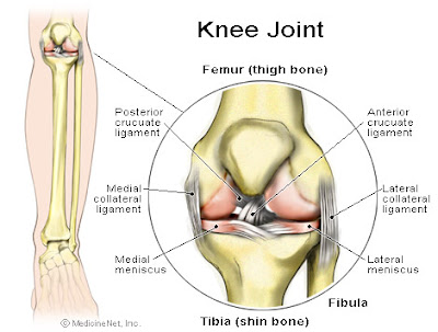 introduction to knee joint anatomy the knee joint is the largest joint ...