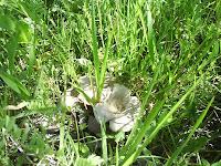 Mushrooms / Ciuperci