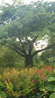 Shakespeare Garden, cherry tree, Stanley Park, Vancouver
