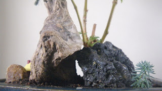 driftwood on volcanic rock