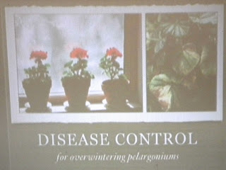 Disease control for overwintering pelargoniums presentation