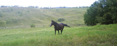 horse running on meadow