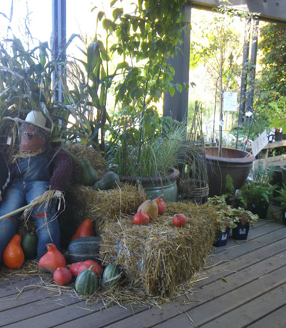 Fall pumpkin decor at Vandusen Entrance Pavilion