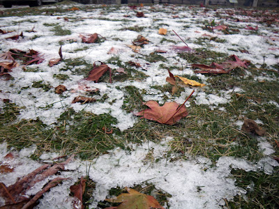 First snow over grass and fall leaves