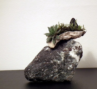 Oyster shell with accent plants on calcite rock