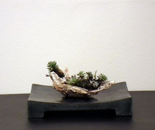 Oyster shell with succulent plants on rock table display