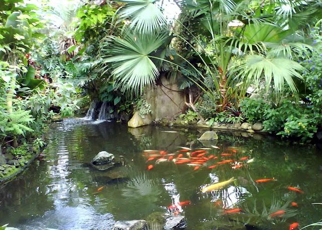 dreaming garden - butterflies garden