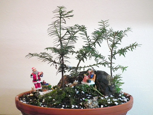 Santa Claus is coming to town - penjing