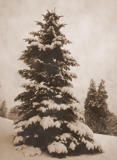 December is snowing