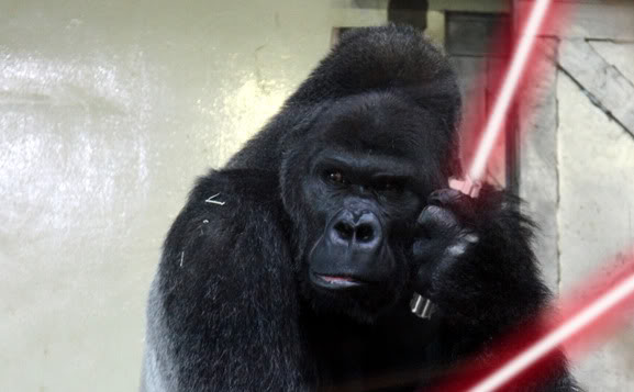 Gorillas Fighting With Lightsabers With lightsabers que comoGorillas Fighting With Lightsabers