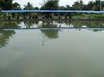 kolam harian kebun sayur