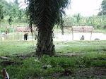 kolam harian nagahuta