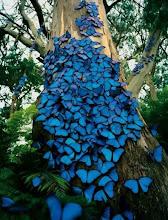 Miles de mariposas revolotean en mi cabeza...