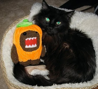 Cat and Domo