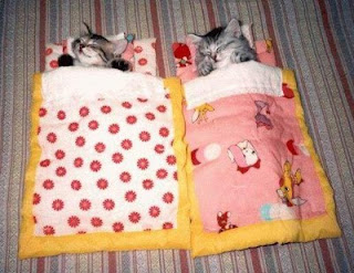 Kitties in sleeping bags