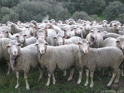 <Off Topic> - Página 2 Manada+ovejas+2