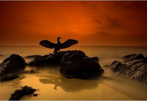 Foto Bayangan Burung