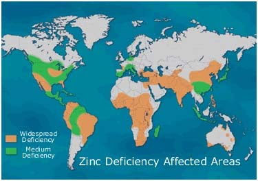 Zinc fertilizer application and usage application of zinc for Soil zinc deficiency