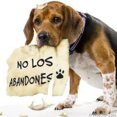 No los abandones