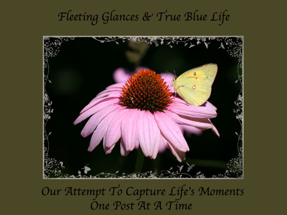 Fleeting Glances & True Blue Life